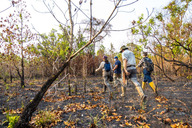 Pesquisa sobre a Fauna RPPN Sesc Pantanal_