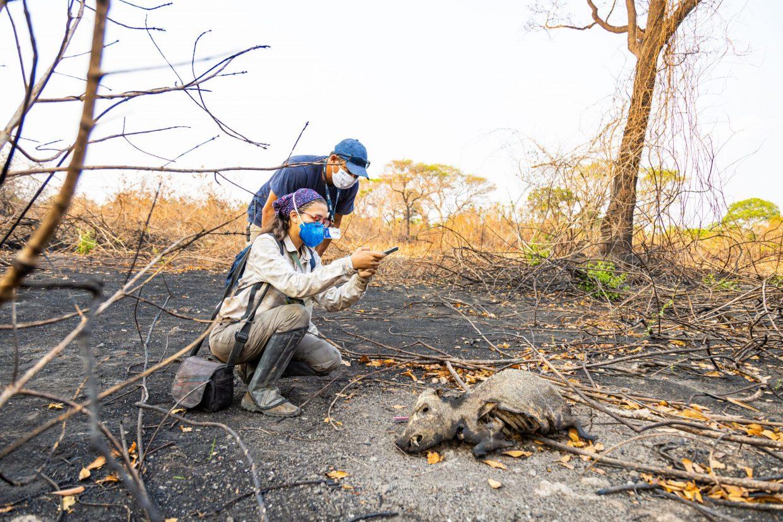 Pesquisa sobre a fauna Crédito Jeferson Prado