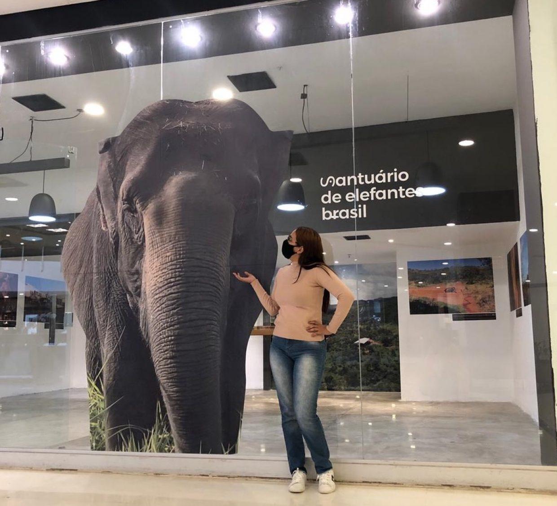 exposição elefantes